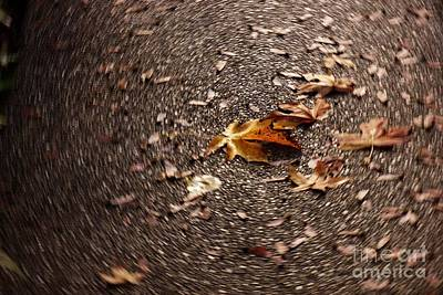 Lint Photograph - Leaf Spin by Emily Lint