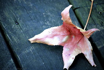 Photograph - Leaf by Stacie  Goodloe