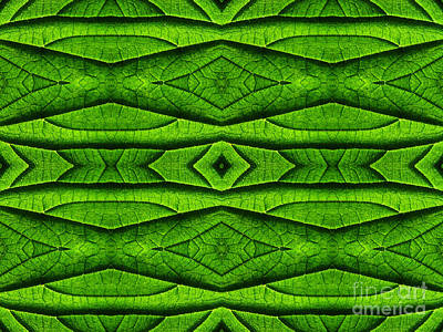 Sheep - Leaf Structure Abstract by Barbara Moignard