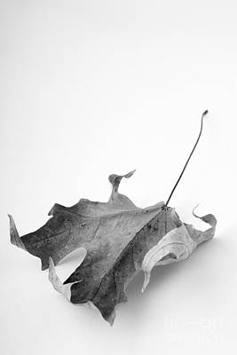 Photograph - Leaf Study 4 by Edward Fielding