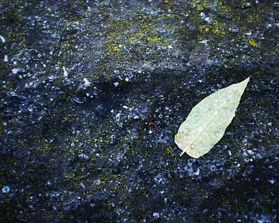 Leaf Art Print by Tanya Harrison