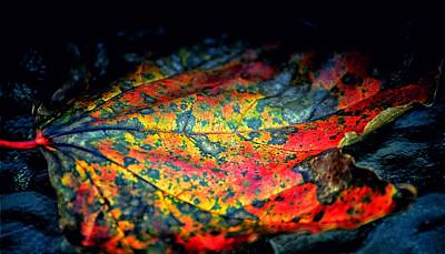 Photograph - Leaf Tapestry  by Beth Akerman