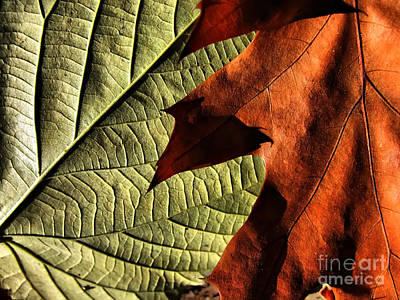 Photograph - Leaf Texture - Still Life by Daliana Pacuraru