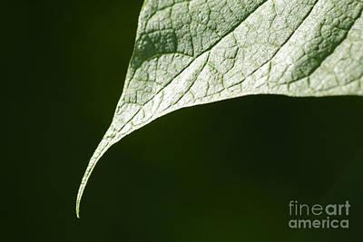 Leaf Art Print by Tony Cordoza