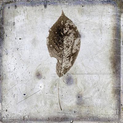 Dried Photograph - Leaf  Vintage Look by Bernard Jaubert
