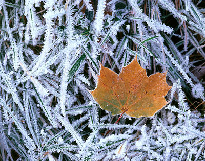 Photograph - Leaf With Frost by Hans Reinhard