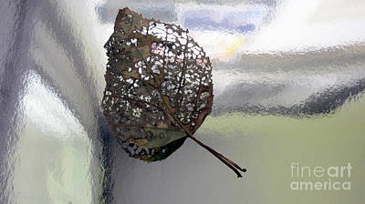 Photograph - Leaf Without A Tree by Andre Paquin