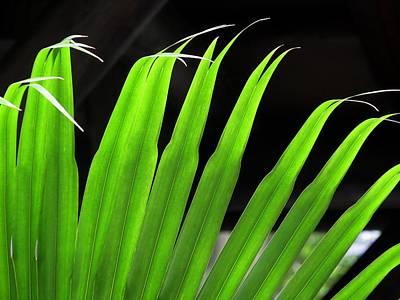 Palms Photograph - Leaf by Zina Stromberg