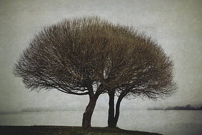 Print featuring the photograph Leafless Couple by Ari Salmela