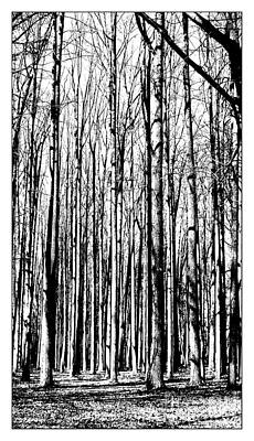Photograph - Leafless Forest by Marcia Lee Jones