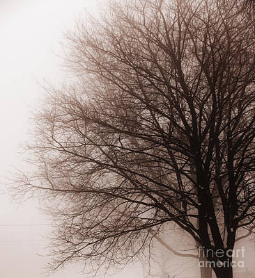 Leafless Tree In Fog Art Print