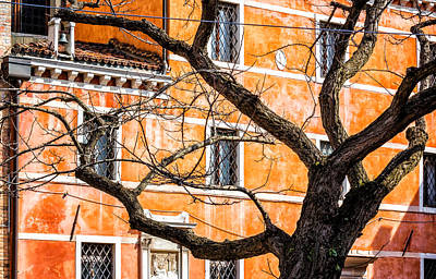 Leafless Tree In Venice Art Print