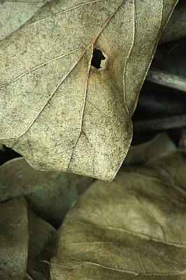 Photograph - Leafpile 2 by David Weeks