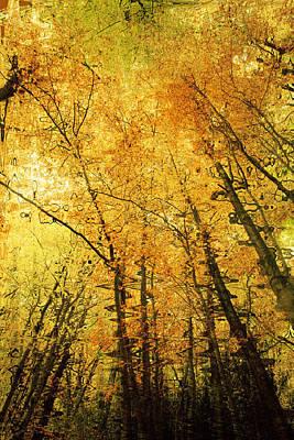 Leafy Canopy Iv Art Print by Natalie Kinnear