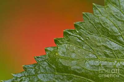 Leafy Art Print by Heiko Koehrer-Wagner