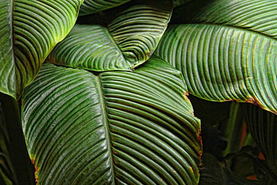 Photograph - Leafy Lines by Bill Kesler