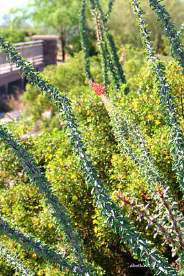 Photograph - Leafy Ocotillo by Dick Botkin