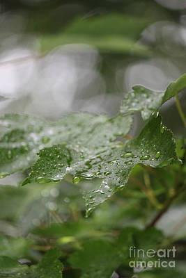 Leafy Raindrops Art Print