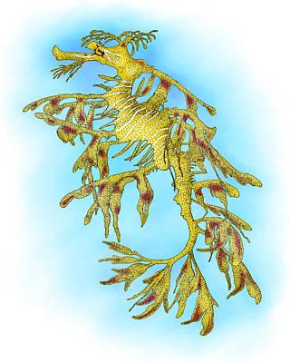 Leafy Sea Dragon Art Print