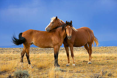 Lean On Me Wild Mustang Art Print