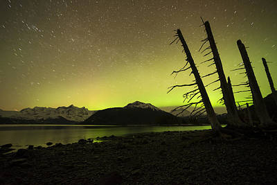 Aurora Borealis Photograph - Leaning Left by Ted Raynor