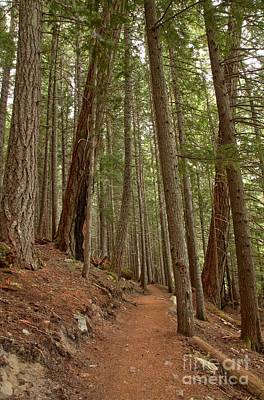 Photograph - Leaning Over The Trail by Adam Jewell