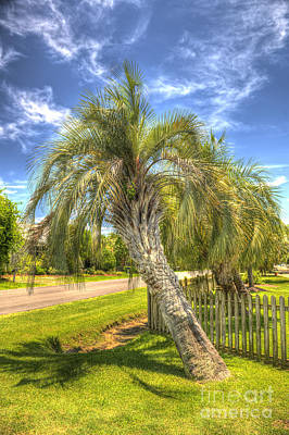 Photograph - Leaning Palm by Dale Powell