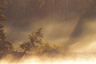 Photograph - Leaning Tree In Swirling Fog by Larry Ricker
