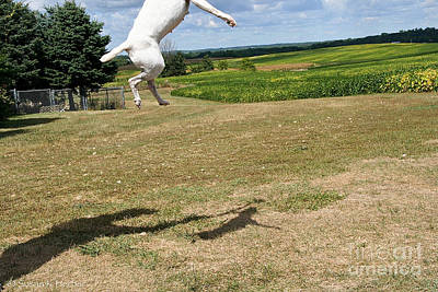 Photograph - Leap Higher by Susan Herber