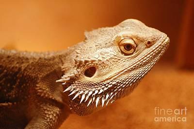 Photograph - Leapin' Lizard by Anjanette Douglas