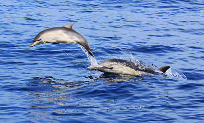 Photograph - Leaping Baby Dolphin by Michael Peak