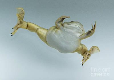 Photograph - Leaping Frog by Dan Suzio