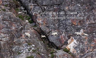 Photograph - Leaping Mountain Goats by June Jacobsen