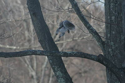 Photograph - Leaping Squirrel by Neal Eslinger