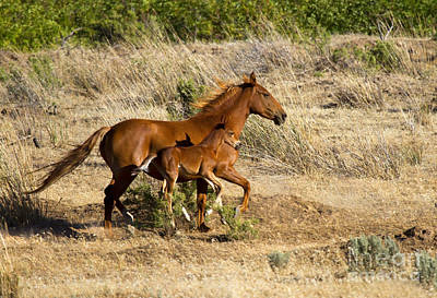 Foal Photograph - Learning To Run by Mike  Dawson