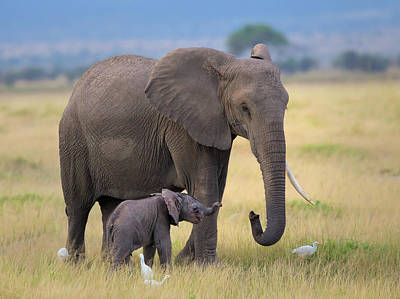 Baby Elephant Wall Art - Photograph - Learning by Young Feng