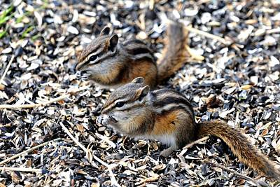 Photograph - Least Chipmunks - Eating Lunch by Marilyn Burton