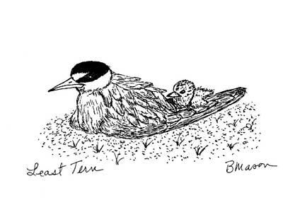 Leasyt Tern Art Print by Becky Mason