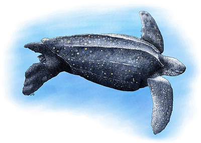 Photograph - Leatherback Sea Turtle by Roger Hall