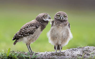 Burrowing Owl Wall Art - Photograph - Leave Me Alone! by Greg Barsh