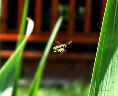 Art Print featuring the photograph Leave No Bee Behind by Thomas Woolworth