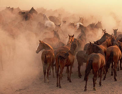 Horse Herd Photograph - Leave With Something Left Undone by Nimet G?nen? ??naro?lu