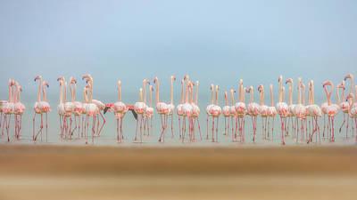 Sea Bird Photograph - Leavers by Faisal Alnomas