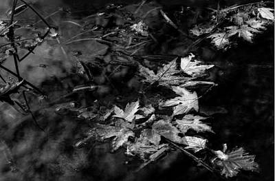 Photograph - Leaves 1 by Jim Vance