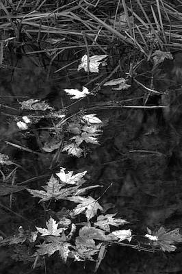Photograph - Leaves 3 by Jim Vance