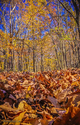 Decay Photograph - Leaves Above Leaves Below by LeeAnn McLaneGoetz McLaneGoetzStudioLLCcom