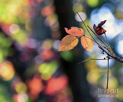 Colorful Leaves Photograph - Leaves And Autumn Bokeh by Kerri Farley