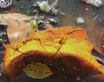Photograph - Leaves And Bubbles by Todd Sherlock
