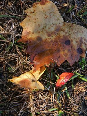 Leaves And Light Original