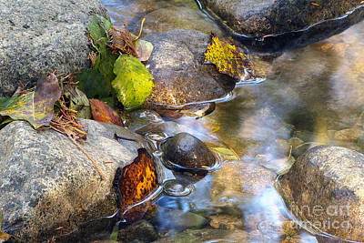 Autumn Leaf On Water Photograph - Leaves And Needles by Sharon Talson